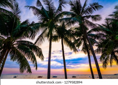 Beautiful colorful silhouette coconut palm trees on beach at sunset.