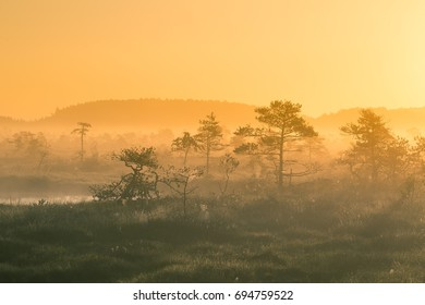 A beautiful, colorful sunrise landscape in a marsh. Dreamy, misty swamp scenery in the morning. Colorful, artistic look.