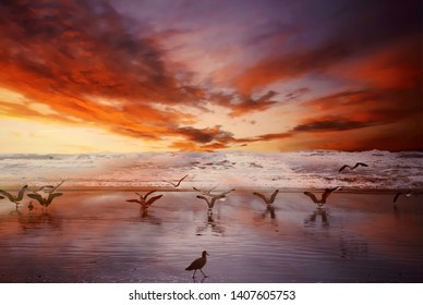 beautiful colorful sunset at beach with seagulls