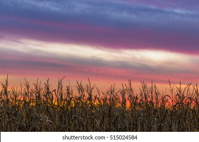 A beautiful, colorful sunset sky tops a Midwestern cornfield at harvest time.