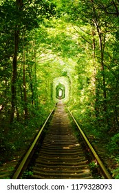 Beautiful colorful tree alley in forest,  natural background. Magic Tunnel of Love, green trees and the railroad, in Ukraine. A natural tunnel formed by trees along a rail train.