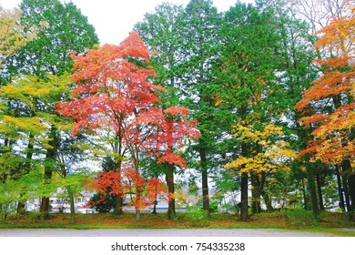 The beautiful of colorful of trees