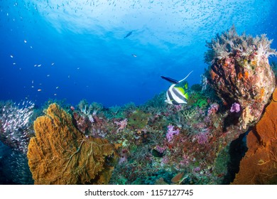 A beautiful, colorful tropical coral reef system