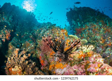 Beautiful, colorful tropical coral reef at the Surin Islands (Richelieu Rock)