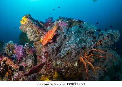 A beautiful, colorful tropical coral reef system in Thailand's Andaman Sea