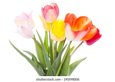 Beautiful colorful tulips  on white background