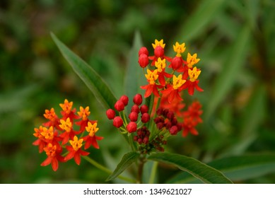 Beautiful and colorful wild flower grows in the forest of the Gocta falls in Amazonas.