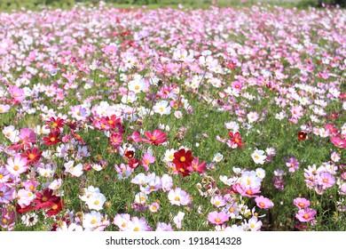 Schöne bunter Winterblumen Sonnige Tage im Freien