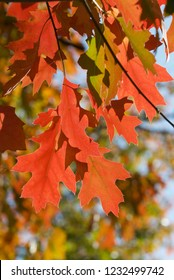 beautiful colors of autumn colors