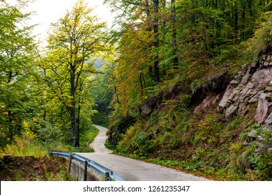 Beautiful colors of autumn leaves in the forest, and road  that leads to Babin zub (The Grandmather's tooth) which is the most beautiful peak of Stara planina ( Balkan mountains )