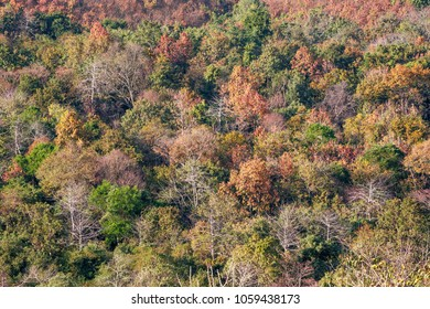 Beautiful colors of the forest in the dry season.