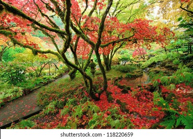 beautiful colors of Japanese maples in Japanese Garden of the national historical site Butchart Gardens, Vancouver island, British Columbia, Canada