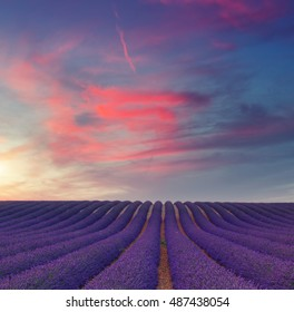 Beautiful colors purple lavender fields at sunset near Valensole, Provence in France