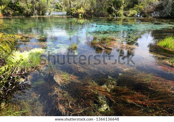 Beautiful colors of water plants