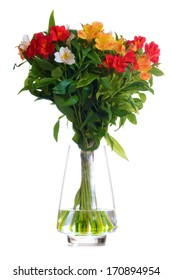 Beautiful Coloured Flowers in the Glass Vase Isolated on the White Background