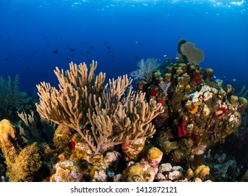 Beautiful colourful coral reef scape with hard coral, soft coral, sponges and reef fish with blue background in Utila, Honduras