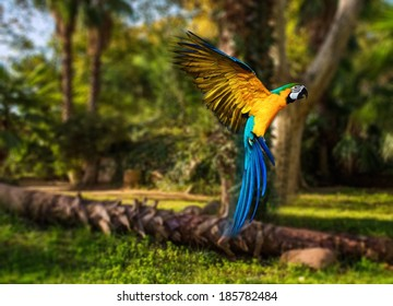 Beautiful colourful parrot over tropical background