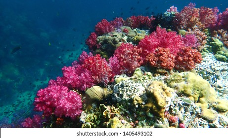 A beautiful Colourful soft corals and marine in Koh Lipe, Thailand