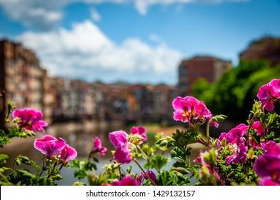 Beautiful colours of Girona during the famous Temps de Flors