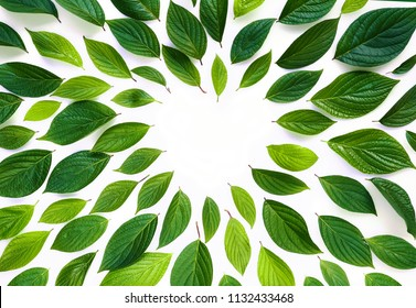 Beautiful composition layout, frame of fresh juicy textured green leaves with copy space, isolated on white background,  flat lay, nature concept, close-up macro.
