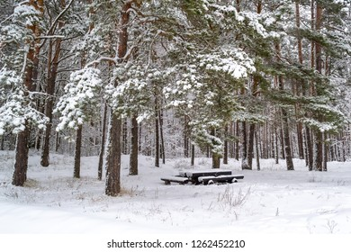 Astonishing The Table And Benches Are Made Of Natural Trees Images Download Free Architecture Designs Scobabritishbridgeorg