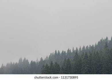 Beautiful coniferous forest surrounded by mist. Firs, larches. Copy space for text. Styria mountains, Austria