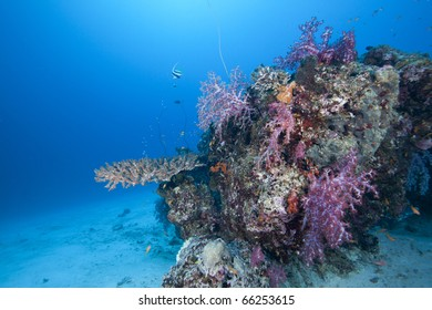 Beautiful Coral block in the Andaman Sea Thailand with colorful hard and soft corals and fish surrounding  it!