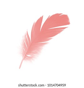 Beautiful coral pink feather isolated on white background