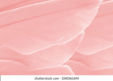 Beautiful Coral Pink vintage color trends feather texture background