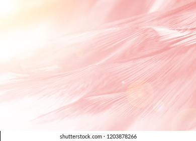 Beautiful Coral Pink vintage color trends feather pattern texture background with orange light flare