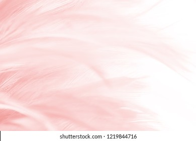Beautiful Coral Pink vintage color trends feather pattern texture background