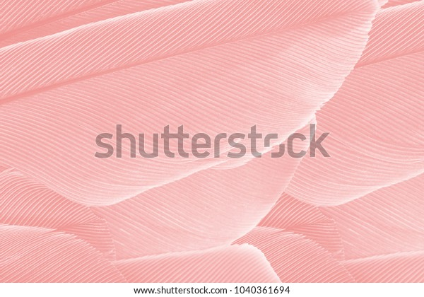 beautiful-coral-pink-vintage-color-600w-