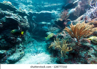 Beautiful coral reef in caribbean sea, Mexico