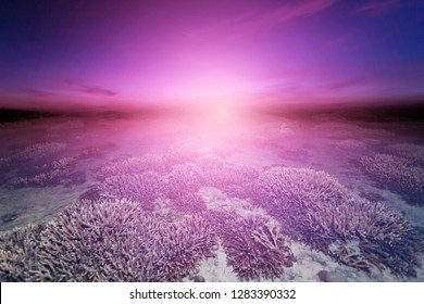 Beautiful coral reef during low tide water in the sea beautiful light sunrise dramatic sky over sea,Majestic sunlight and cloud flowing in the sky,Idyllic nature peaceful background