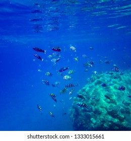 Beautiful coral reef fishes at Perhentian Island, Malaysia. image contains noise due to high ISO.