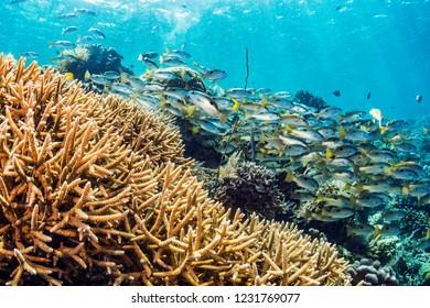 Beautiful coral reef scene. Shot in Indonesia