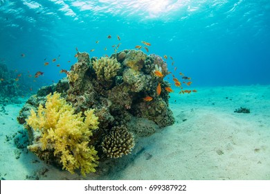Beautiful coral reef with sealife. Underwater landscape photo with fish and marine life