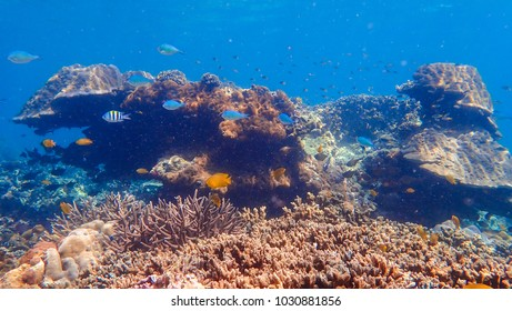Beautiful coral reef and tropical fish underwater, marine life