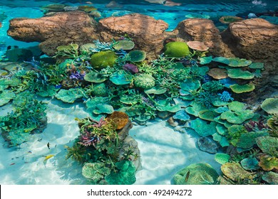 Beautiful coral in underwater with colorful fish and colorful coral.