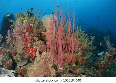Beautiful corals reef at Wakatobi Indonesia