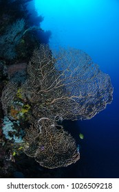 Beautiful Corals and Reefs in Clear Waters of Philippines