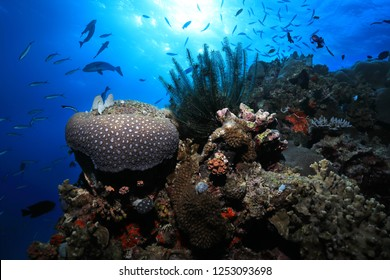 Beautiful Corals and small fish underwater in the Great Barrier Reef of Australia