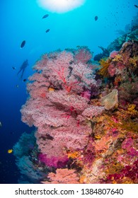 Beautiful Corals in Tubbataha , the Philippines