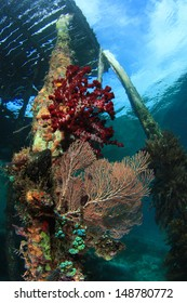 Beautiful corals under the jetty at Raja Ampat, West Papua, Indonesia