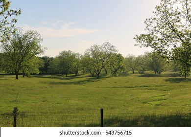 beautiful country landscape green grass and blue sky