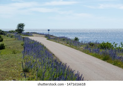 Beautiful country road with blue flowers along the coast of The Baltic Sea on the swedish island Oland