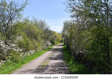 Beautiful country road by leafing season