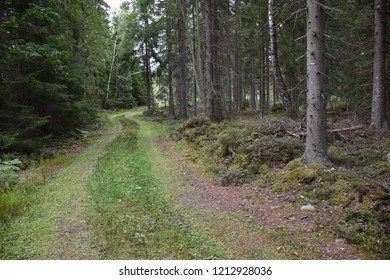 Beautiful country road in a lush coniferous forest
