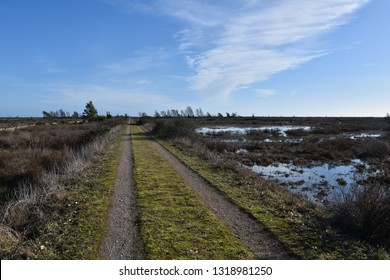 Beautiful country road straight through a great plan landscape at the swedish island Oland