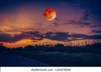 Beautiful countryside area at night. Attractive red blood moon on dark sky with cloudy above silhouettes of trees. Serenity nature background. The moon taken with my camera.